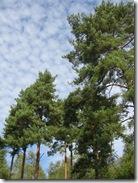 Warburg nature reserve 037